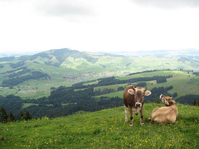 Aussicht auf Jakobsbad im Appenzell